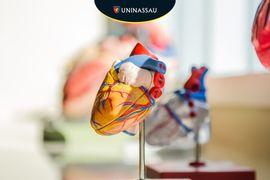 Anatomia-Humana--DISCIPLINA-UNINASSAU-