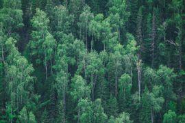 Legislacao-Ambiental-e-Termo-de-Referencia