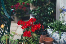 Paisagismo--plantas-para-ambientes-internos