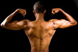 organismo-em-movimento-tecidos-do-sistema-muscular