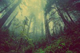Gestao-de-Recursos-Florestais