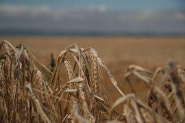 Reforma-Agraria-e-as-Ligas-Camponesas