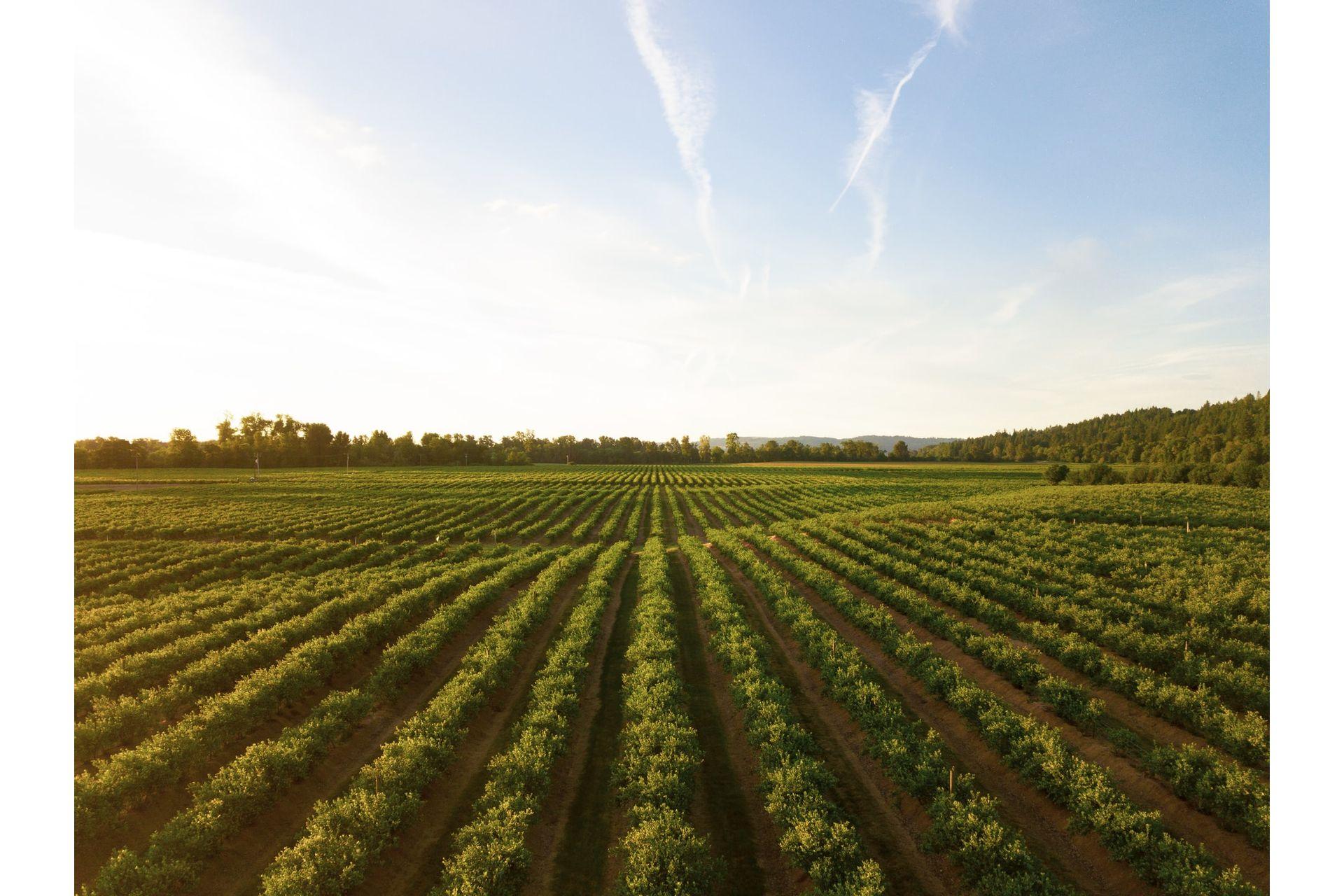 Tecnicas-de-Hidraulica-para-Agricultura