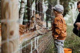 Zootecnia--Atribuicoes-de-um-Tecnico-em-Producao-Animal