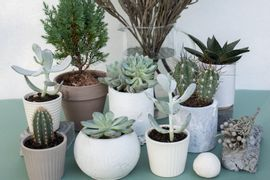 Utilizacao-de-Flores-e-Plantas-de-Vaso-no-Paisagismo