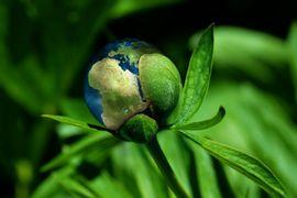 projetos-de-preservacao-do-meio-ambiente