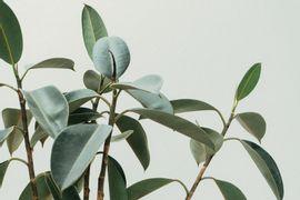 Sistema-de-Plantio-Direto-e-Cultivo-Minimo