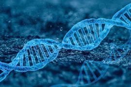 Genes-em-Evidencia--Fenotipagem-e-Mutacoes