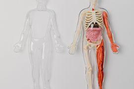 Hematopoiese-e-Orgaos-Hematopoieticos--Processo-e-Fases
