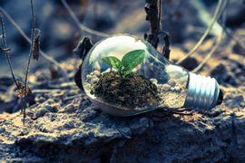Dinamica-e-Perturbacoes-de-Comunidades-Ecologicas