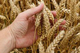 Procedimentos-de-Experimentos-na-Agronomia